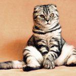 Hoe bescherm je katten tegen teken?